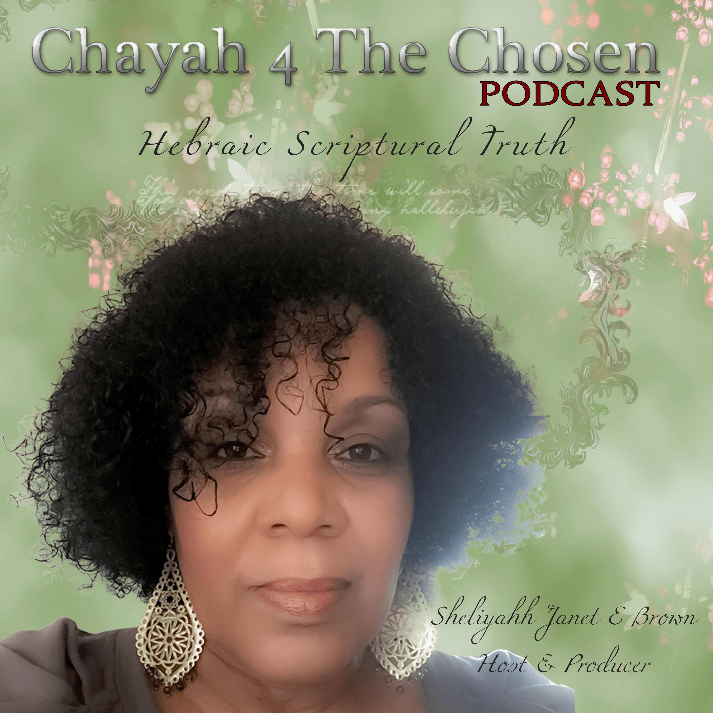 CHAYAH 4 The Chosen!
