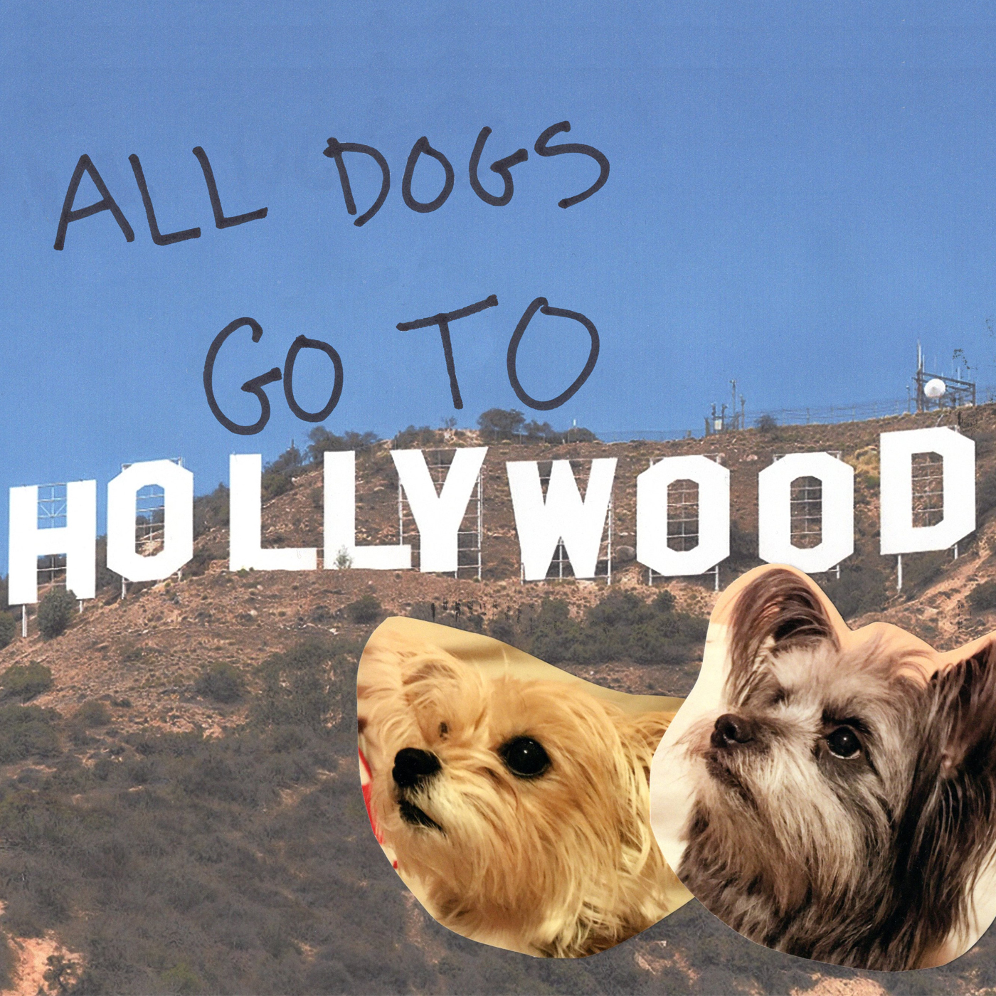 All Dogs Go To Hollywood | Listen via Stitcher for Podcasts