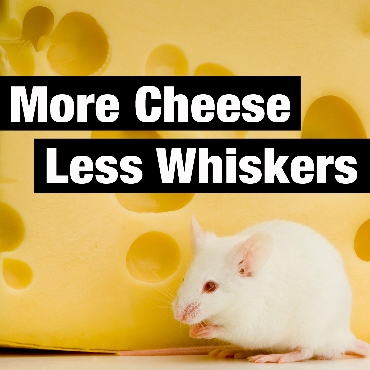 Image result for more cheese and whiskers podcasts