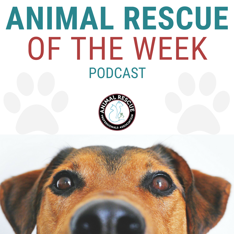 Yaqui Animal Rescue & Sanctuary - TEXAS